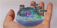 Google pustil haldu nových 3D modelů do vyhledávání. Podívejte se